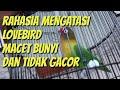 Rahasia Mengatasi Lovebird Macet Bunyi Dan Tidak Gacor  Mp3 - Mp4 Download