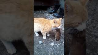 мой кот крысолов