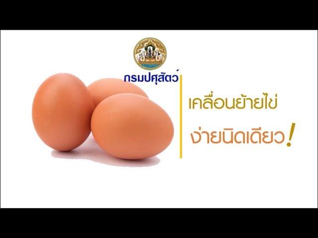 การทำใบเคลื่อนย้ายไข่ ระบบ EPP โดยกรมปศุสัตว์