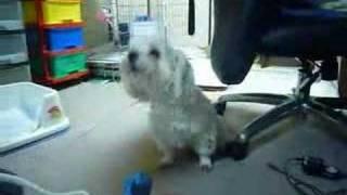 ピアニカの伴奏に合わせて歌う犬です。