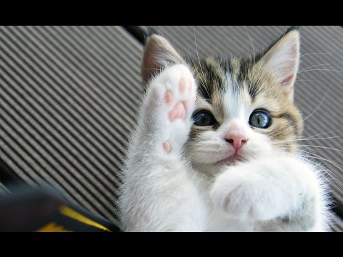 Funny Cats And  Cute Kittens Playing Compilation For Laugh !