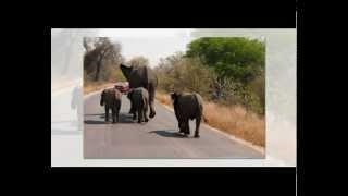 Henry Mancini ~ Baby Elephant Walk ~ 1961-2