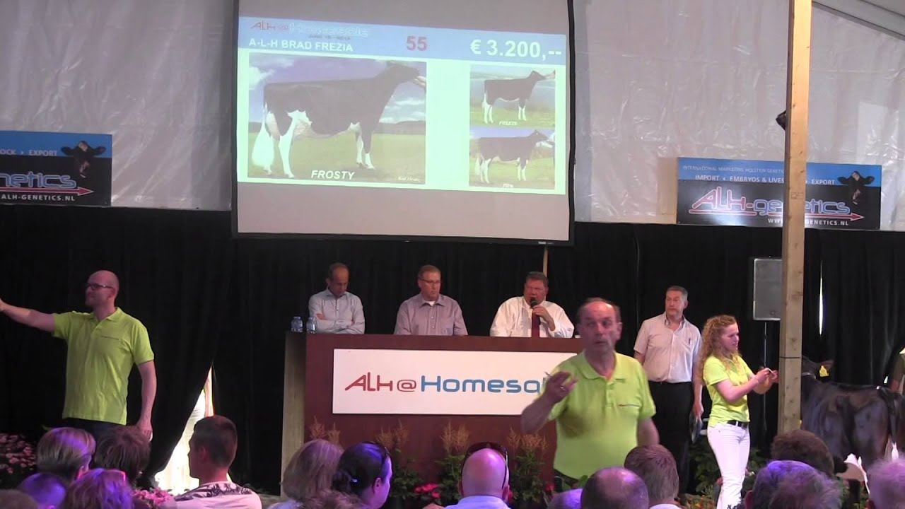 ALH SALE 2015 in Damwoude (02): Powered by CATTLE.de