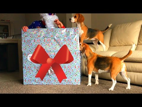 Best Christmas Present for Your Dogs : Funny Dogs Louie & Marie