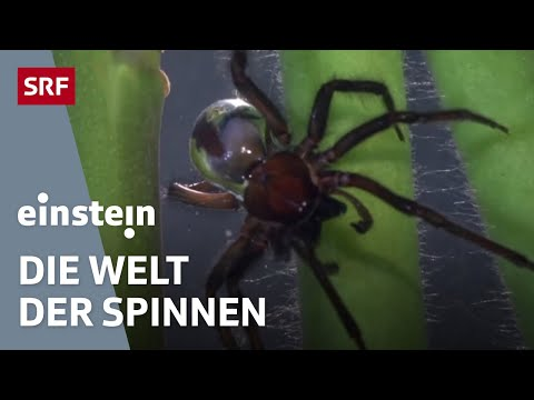 Spinnen - Einstein Spezial vom 8. Januar 2015