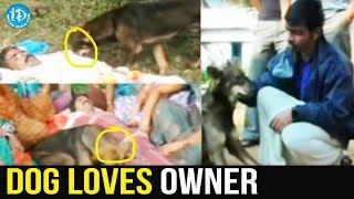 Dog Loves Owner