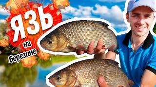 Трофейный ЯЗЬ Поиск точки ловли на фидер Супер рыбалка Фидер на реке