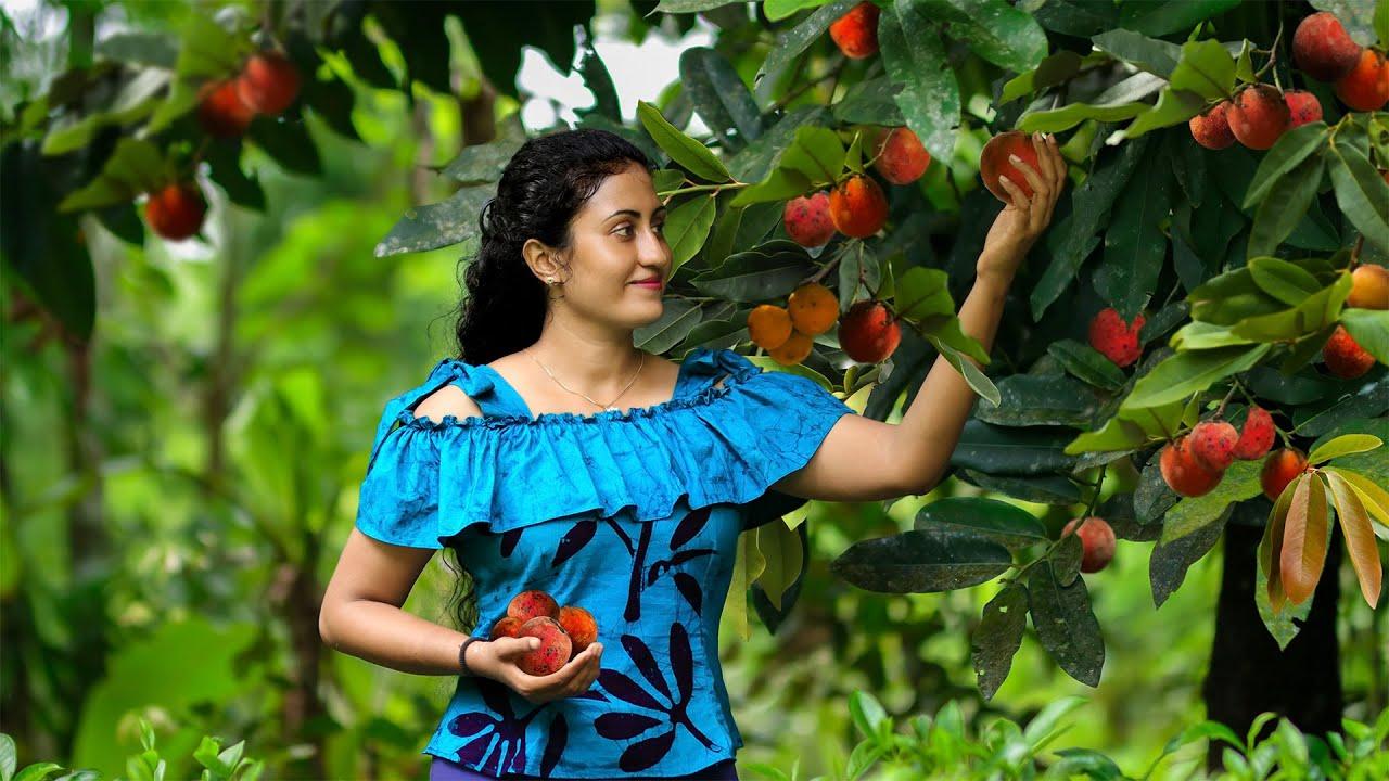 Full of Velvet apple tree made my family time more delicious again & again |Poorna - The nature girl