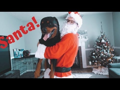 Rottweiler meets Santa for first time! |31