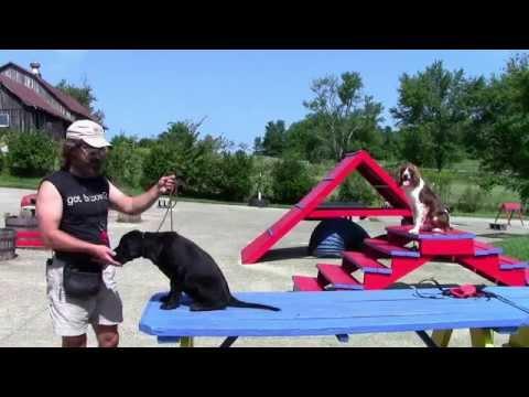 training-your-labrador-retriever-part-2