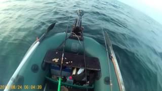 Рыбалка на Чёрном море с лодки 24.08.2016. Ловим кнута.(Видео-отчёт о рыбалке на море с лодки возле г. Южный 24.08.2016., 2016-08-25T16:55:41.000Z)