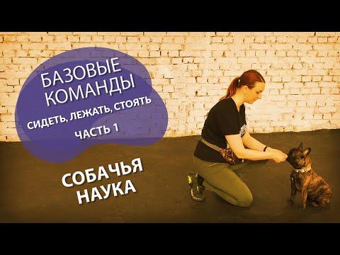 Дрессировка щенка: с чего начать? Учим базовые команды - сидеть, лежать, стоять. Часть 1.