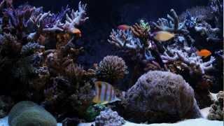 Морской аквариум(Видеосъемка красивого морского аквариума с забавной желтой рыбкой, на фоне приятной музыки. http://oformi-akvarium.ru., 2012-06-02T07:29:57.000Z)
