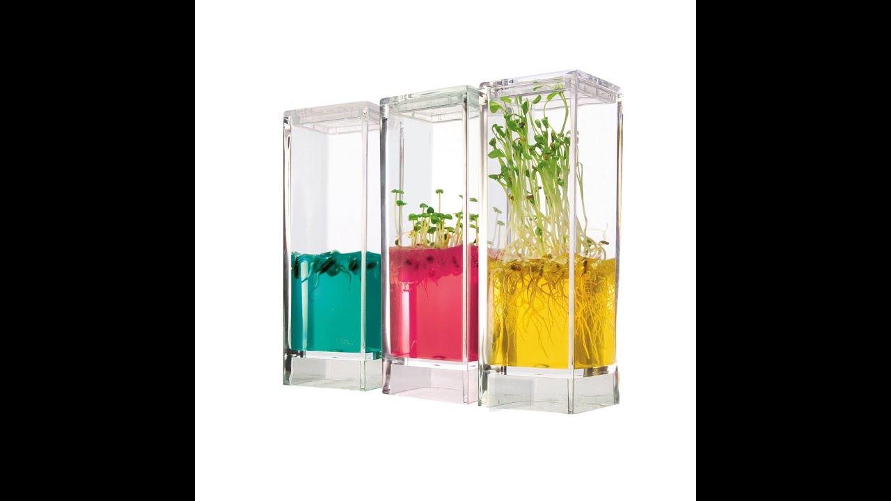plantes qui poussent sans eau ni lumi re youtube. Black Bedroom Furniture Sets. Home Design Ideas