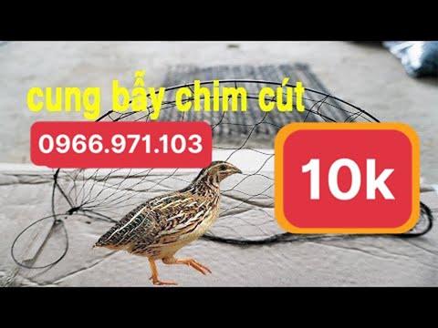 Cung bẫy chim cút 15k , bẫy chim cút giá rẻ , thòng bẫy cút