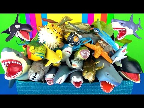 Learn Sea Animals Names Learn Sharks, Whales, Fish Jaws  - Educational Toys for Kids