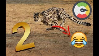 Run Compilation 2 (Animal Version)Funny Cat Run Video 2!! Most Hilarious !!!😂😆😆