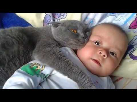 Кошки любят человеческих детей)