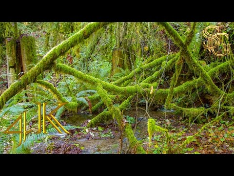The murmur of the water in a beautiful forest |  4K Ultra HD