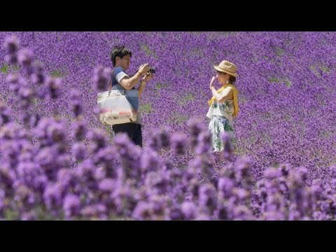 Hokkaido summer flowers - Japan: Earth's Enchanted Islands: Episode 3 Preview - BBC Two