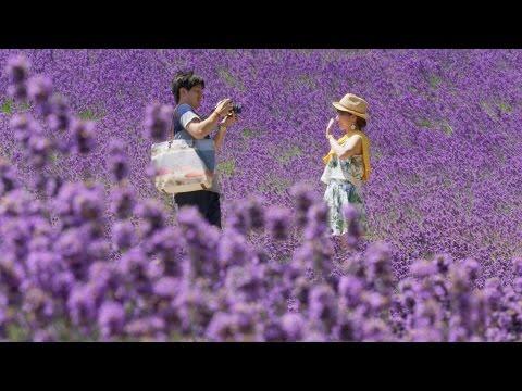 Hokkaido summer flowers - Japan: Earth