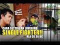 Setingan Lovebird Single Fighter Ala Ck  Mp3 - Mp4 Download