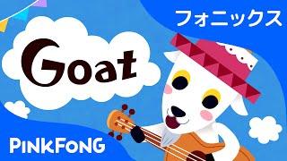 Goat | フォニックス読みG | ABCフォニックスの歌 | ピンクフォン英語童謡