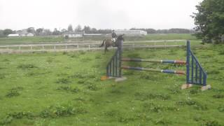 Arty jumping 3ft   3ft 9 course