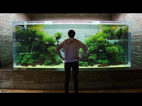 CRAZY Aquascaped Aquariums! Sumida Aquarium Tour in Tokyo Japan