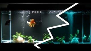 75g goldfish tank night and day lights