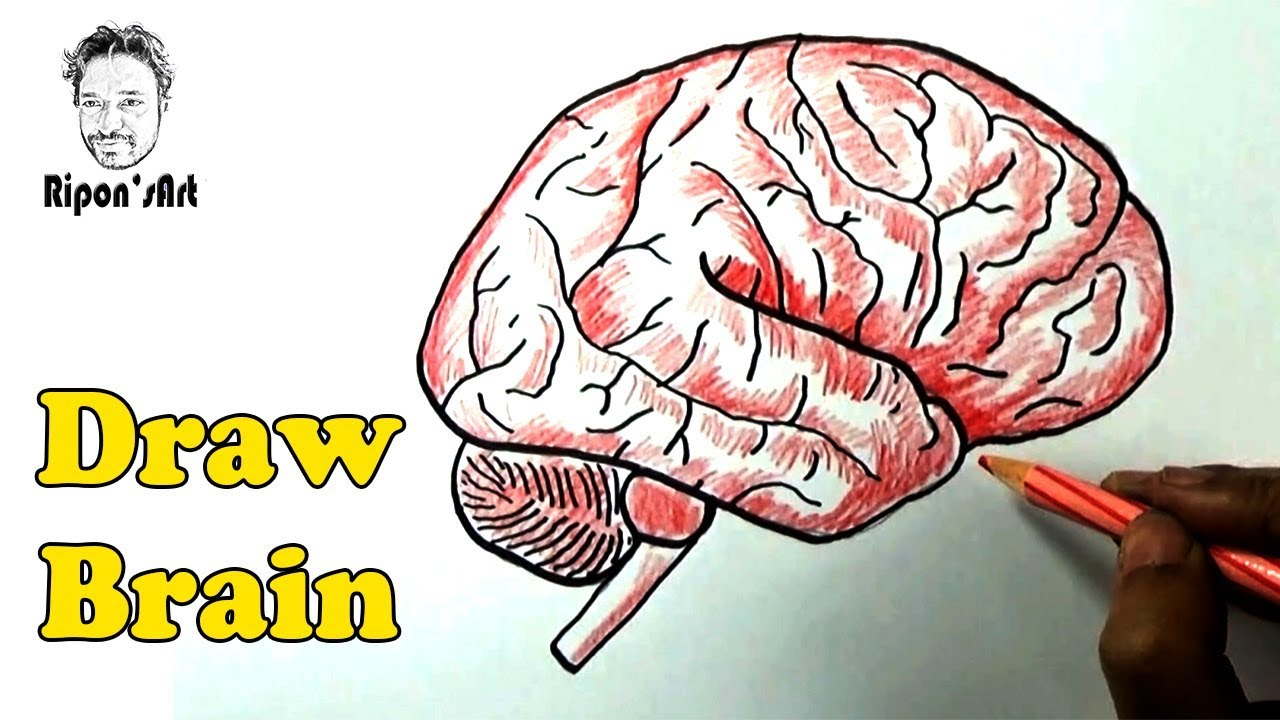 How to Draw a the human Brain.  Ripon's art. - YouTube