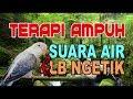 Lovebird Ngekek Panjang Dan Suara Air Terapi Ampuh  Mp3 - Mp4 Download