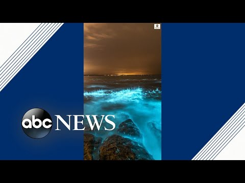 Otherworldly bioluminescent algae makes ocean glow bright blue