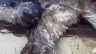 Собаки мучаются перед смертью в Астрахани