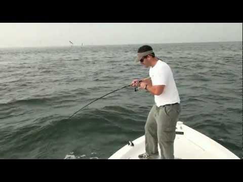 Long Island Sound False Albacore