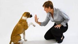 Dog Training | German Shepherd Basics Obedience Training | Dog Training Video
