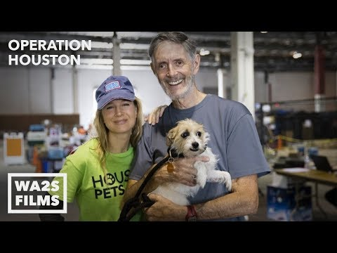Renée Zellweger Is Hope For Paws As She Comforts Rescue Dog After Hurricane Harvey Operation Houston