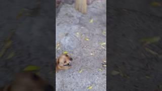 Собака и бабочки