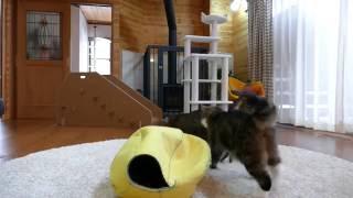 黄色いねこベッドとまるとはな3。-Yellow cat bed and Maru&Hana3.-