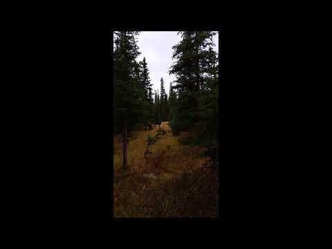 2016 CO Moose