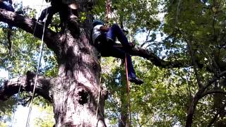 Tree Climbing is a Contact Sport!