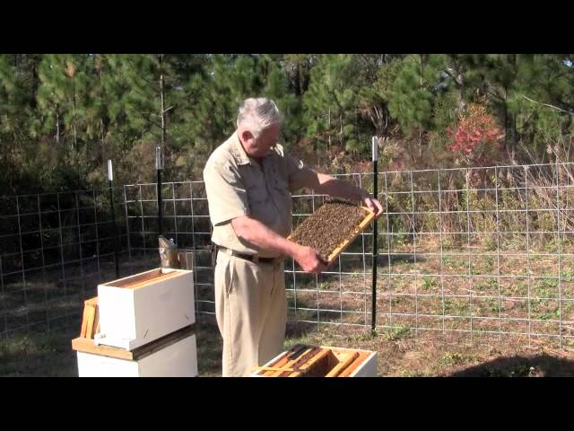 Splitting a Honeybee Hive by Elmore Herman