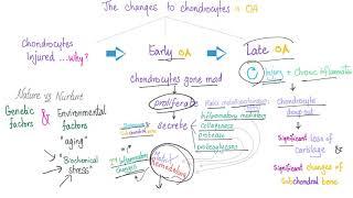 Osteoarthritis (OA) Part 3: Pathophysiology