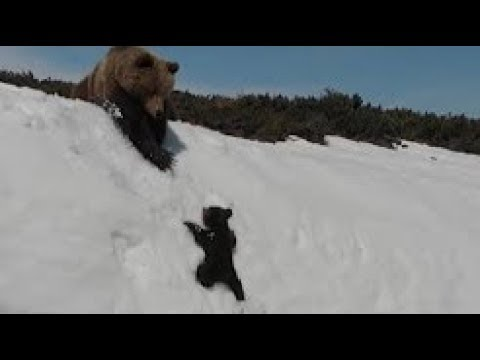 The Paul Castronovo Show - VIDEO: Bear Cub Struggles Up Snow-Covered Mountain