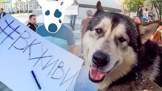 Собаки на Митинге против запрета на ВКонтакте