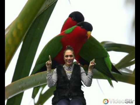 Little Birdie Video Samoan Language Week 2016