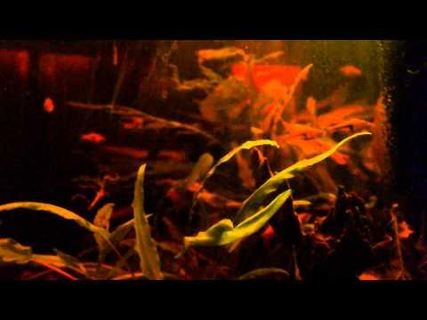 SE THAILAND Biotope Aquarium
