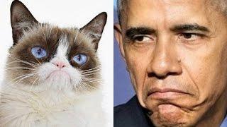 Обама черный кот - ироничная песня _