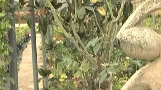 El Jardinero en Casa - Rosales -