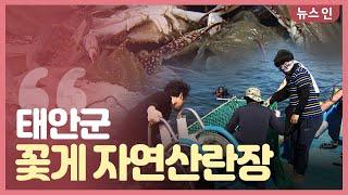 [오늘의 정보] 태안군 꽃게 자연산란장 조성 사업